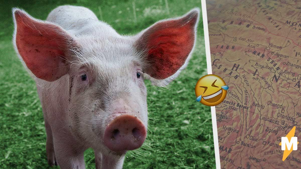 Учёные обнаружили угрозу пандемии свиного гриппа. Но у людей на уме лишь мемы о том, как закончить 2020-й