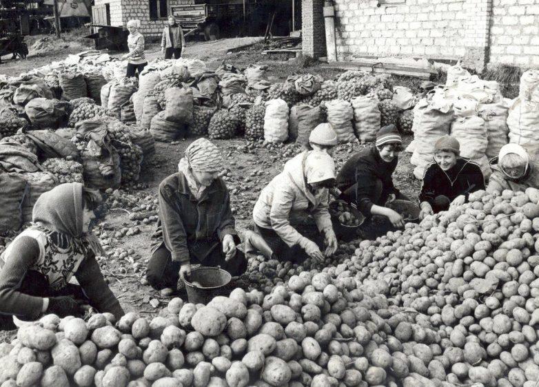 Картошка в Советском Союзе