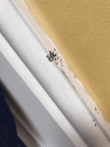 Женщина пыталась узнать, что за черные точки появились в её доме. Ответ оказался ужасом арахнофоба